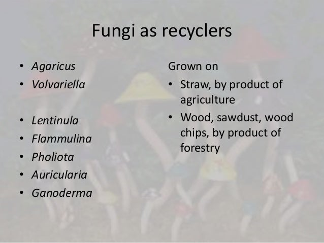 Economically important higher fungi