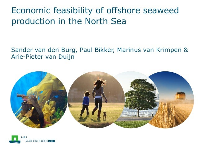 Economic feasibility of offshore seaweed production in the North Sea