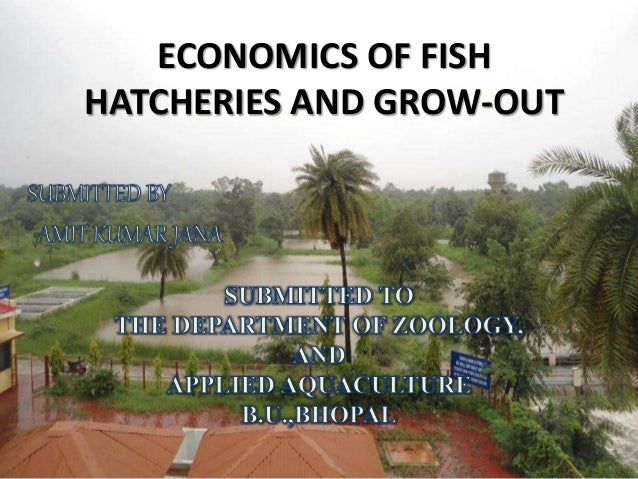Economics of fish hatcheries and grow out