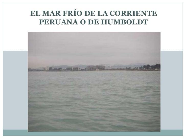 EL MAR FRÍO DE LA CORRIENTE PERUANA O DE HUMBOLDT<br />