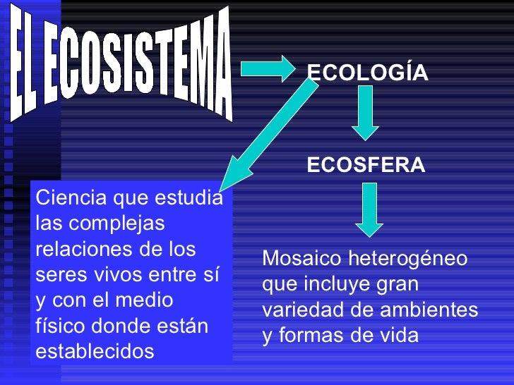 EL ECOSISTEMA ECOLOGÍA ECOSFERA Mosaico heterogéneo que incluye gran variedad de ambientes y formas de vida Ciencia que es...