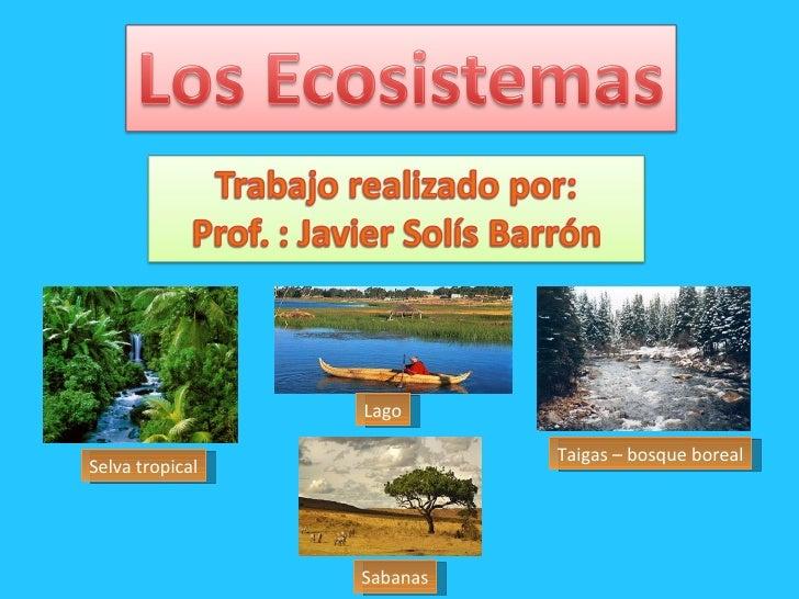 Selva tropical Sabanas Lago Taigas – bosque boreal