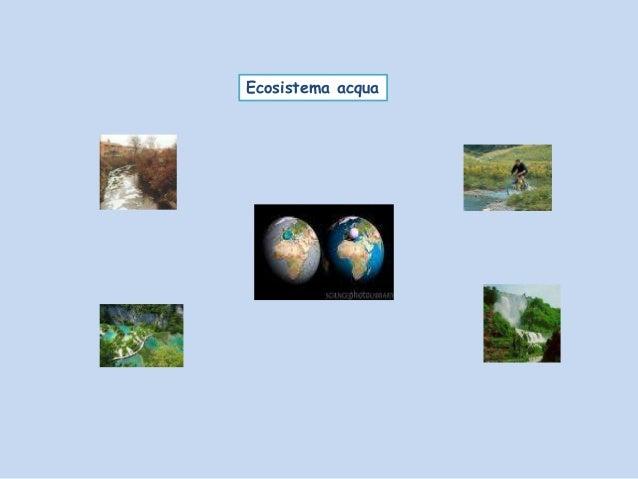 Ecosistema acqua pp