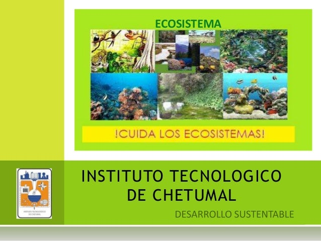 INSTITUTO TECNOLOGICO DE CHETUMAL ECOSISTEMA