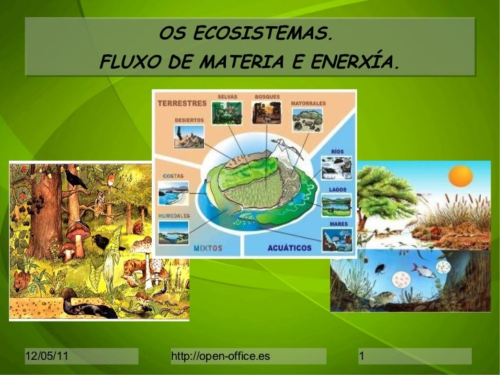 OS ECOSISTEMAS.  FLUXO DE MATERIA E ENERXÍA.