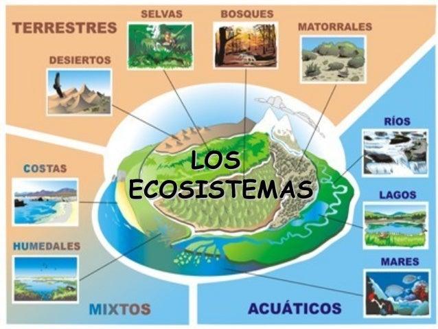 Emiliano Santana Hernandez: Los Ecosistemas