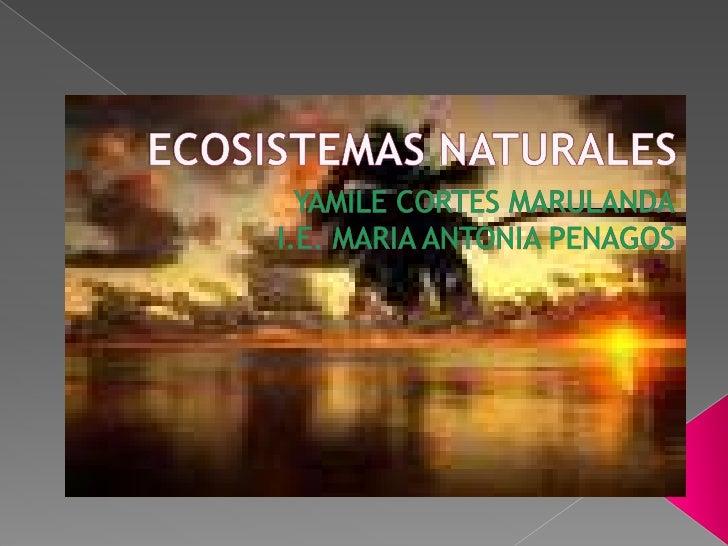 ECOSISTEMAS NATURALES<br />YAMILE CORTES MARULANDA<br />I.E. MARIA ANTONIA PENAGOS<br />