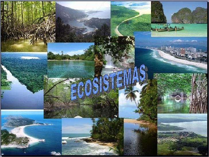 Ecosistemas 05