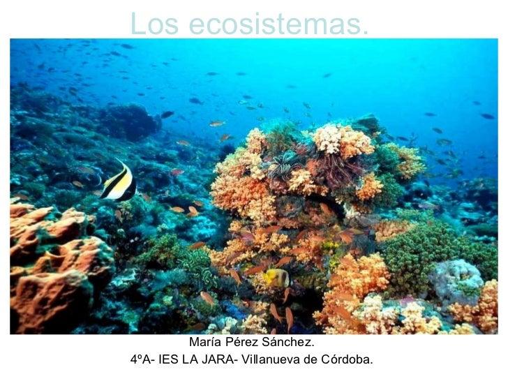 Los ecosistemas. María Pérez Sánchez. 4ºA- IES LA JARA- Villanueva de Córdoba.