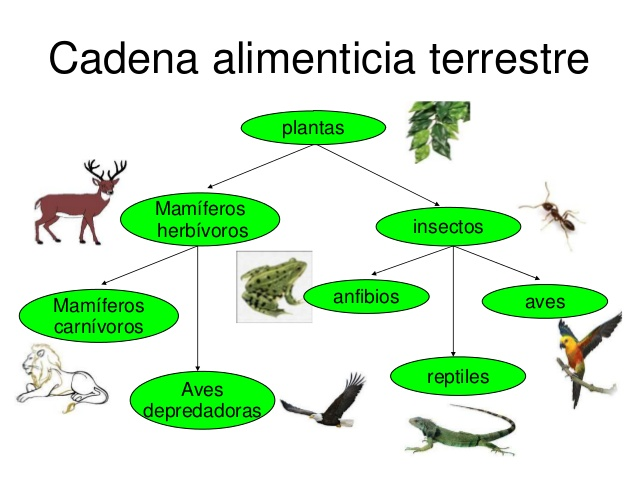 Ecosistemas: Lara Gª, Alejandro V. y Daniel