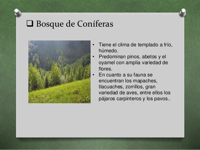 bosque de coníferas tiene el clima de templado a frío