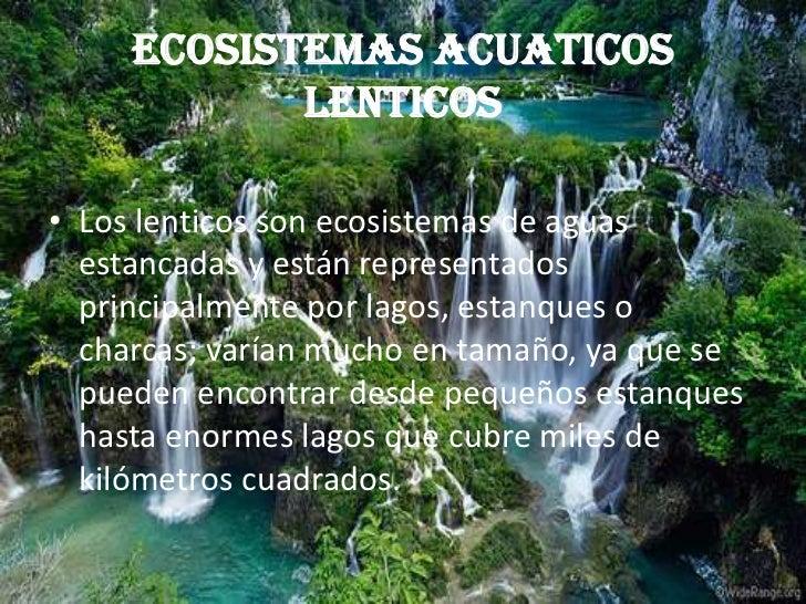 ECOSISTEMAS ACUATICOS LENTICOS<br />Los lenticos son ecosistemas de aguas estancadas y están representados principalmente ...