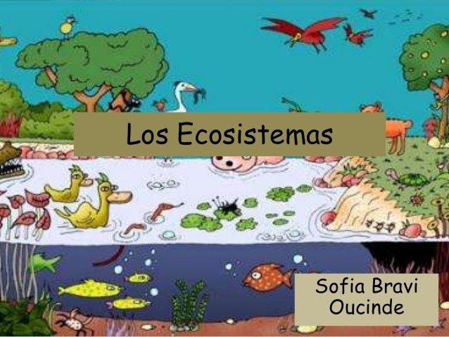 Los Ecosistemas Sofia Bravi Oucinde
