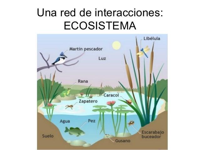 Una red de interacciones:     ECOSISTEMA