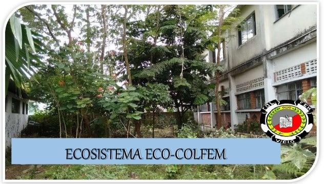 ECOSISTEMA ECO-COLFEM