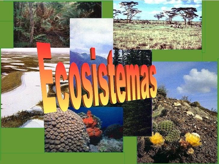 Ecositemas 03
