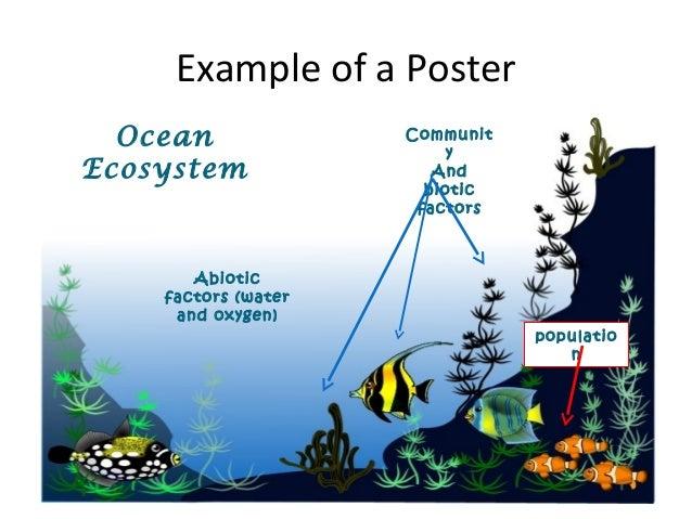 ocean ecosystem information
