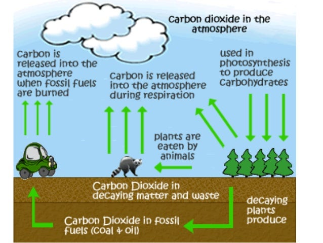 does human produced carbon dioxide contribute to