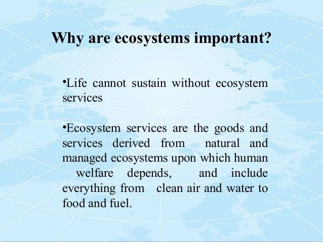 importance of marine ecosystem pdf