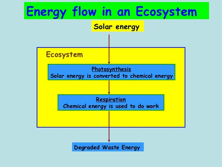 nutrients and energy flow in an ecosystem pictures to pin on pinterest pinsdaddy. Black Bedroom Furniture Sets. Home Design Ideas
