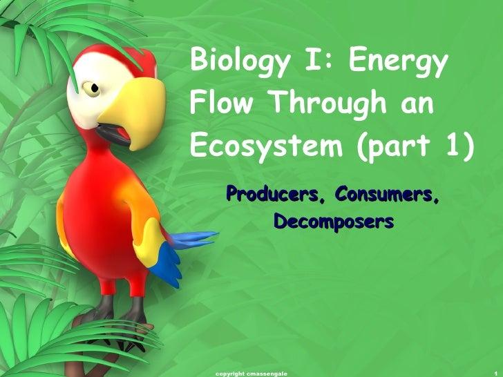Ecosystem energy flow (part 1)