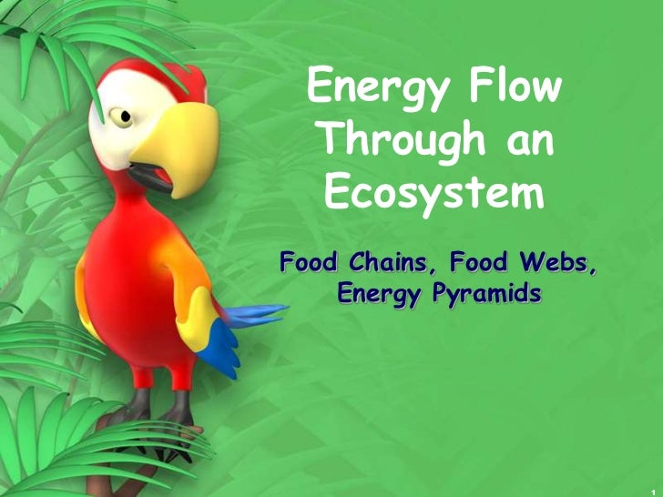 1<br />Energy Flow Through an Ecosystem<br />Food Chains, Food Webs, Energy Pyramids<br />