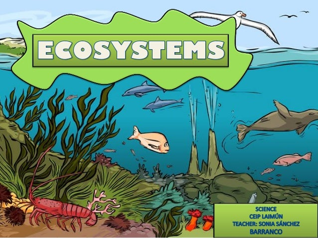 An ecosystem is a combination of three components:  HABITAT LIVING THINGS RELATIONSHIPS  VIDEO: ECOSYSTEMS AND TEST