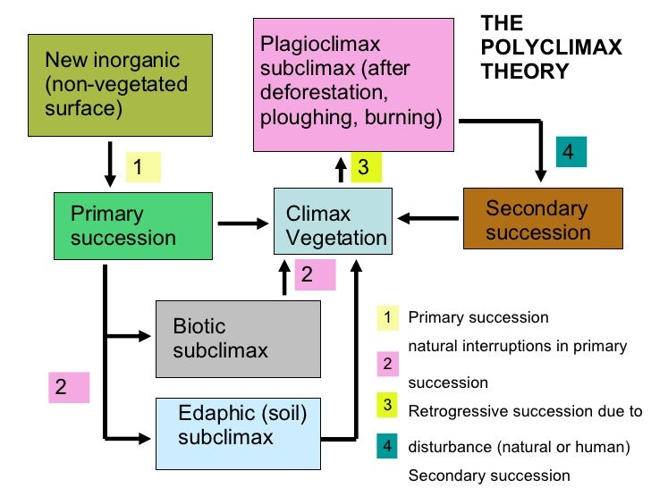 autogenic hypothesis The endosymbiotic theory concerns the origins of mitochondria and chloroplasts,  the endosymbiotic hypothesis was popularized by lynn margulis.