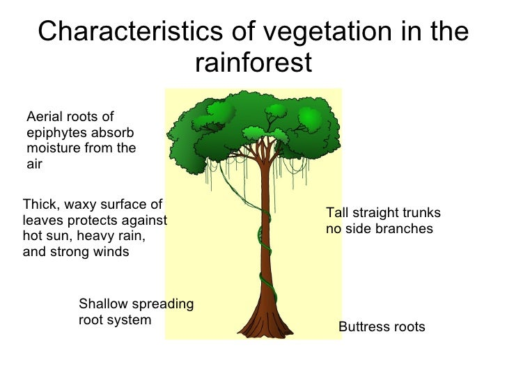 Geography for the IGCSE wiki: Unit 2: Weather, climate and ...