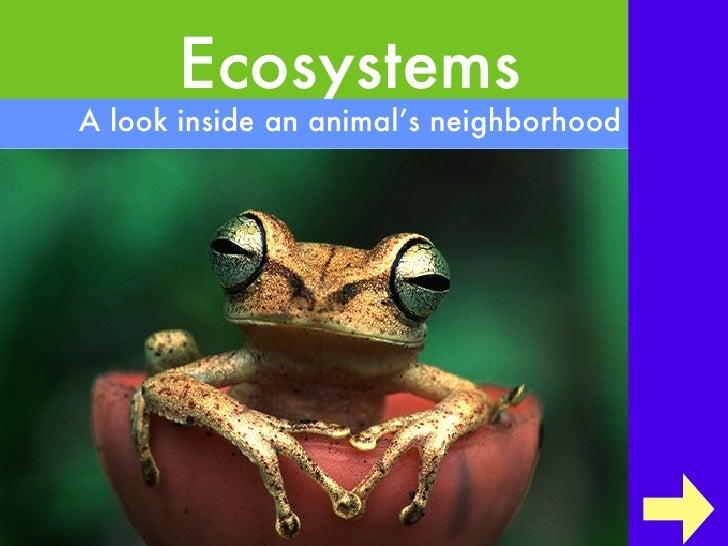 EcosystemsA look inside an animal's neighborhood