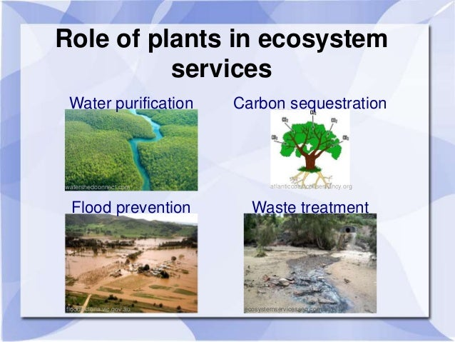 the role and benefits of the wetland ecosystem Wetland ecosystems provide flood protection with a single acre of wetlands being capable of storing over 1 million gallons of water coastal ecosystems coastal areas provide land for homes and businesses, with nearly one-half of the entire world population living within 120 miles of coastline.