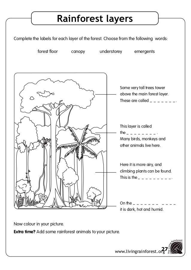 Tropical Rainforest Strata Worksheet - Worksheets