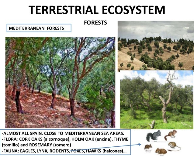 Image Gallery Terrestrial Ecosystem