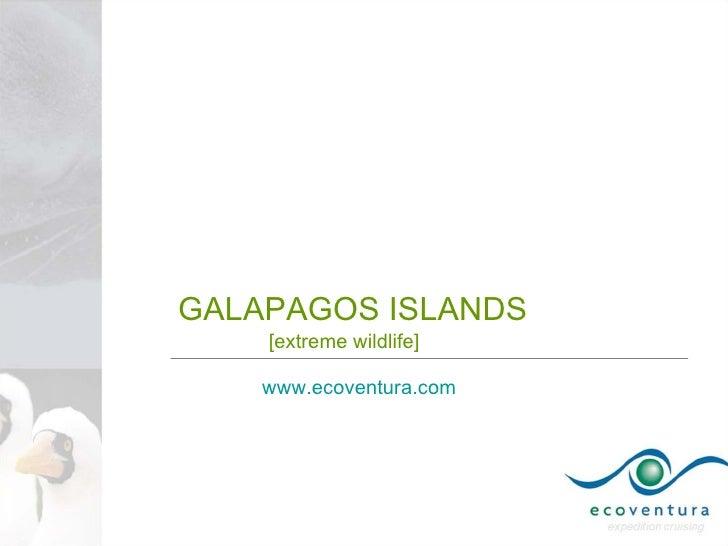 GALAPAGOS ISLANDS     [extreme wildlife]      www.ecoventura.com
