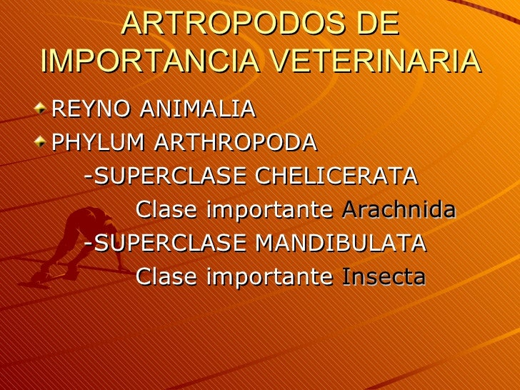 ARTROPODOS DE IMPORTANCIA VETERINARIA <ul><li>REYNO ANIMALIA </li></ul><ul><li>PHYLUM ARTHROPODA </li></ul><ul><li>-SUPERC...