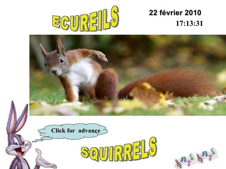 22 février 2010 17:12:31 Click for  advance ECUREILS SQUIRRELS