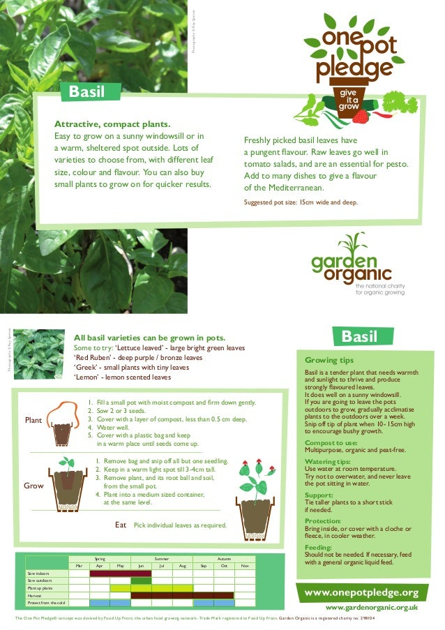 Basil - Organic Growing Guides for Teachers + Students