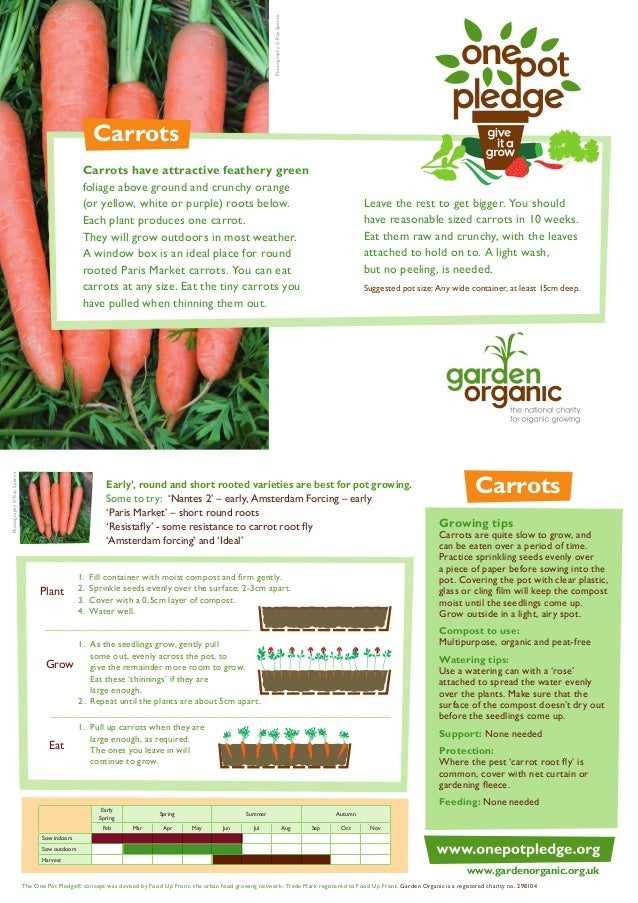 Carrots - Organic Growing Guides for Teachers + Students