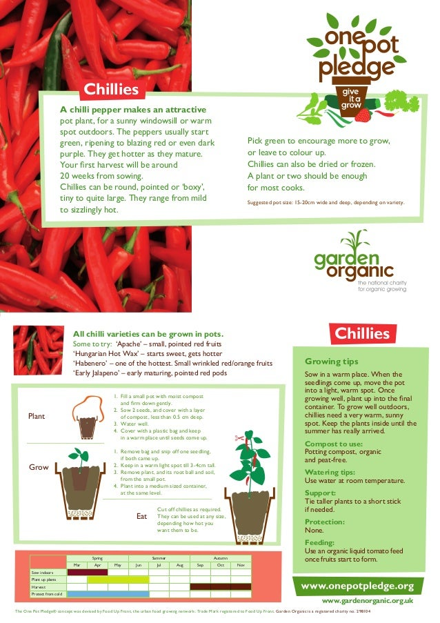 Chillies - Organic Growing Guides for Teachers + Students