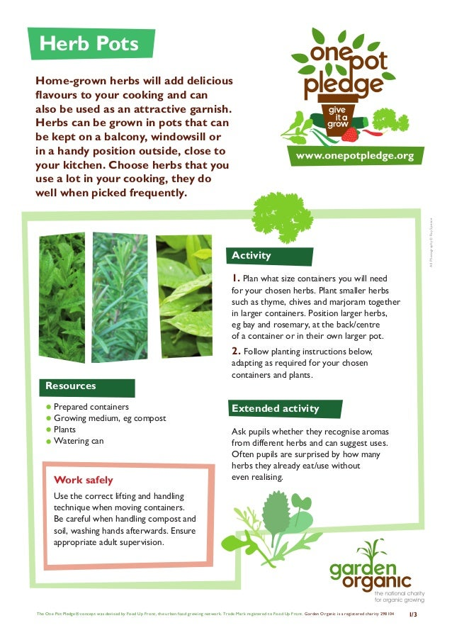 Herb Pots - Organic Growing Guides for Teachers + Students