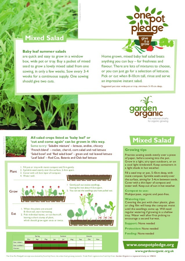 Mixed Salad - Organic Growing Guides for Teachers
