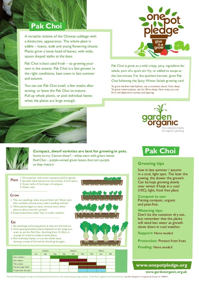 Pak Choi A versatile relative of the Chinese cabbage with a distinctive, appearance. The whole plant is edible – leaves, s...