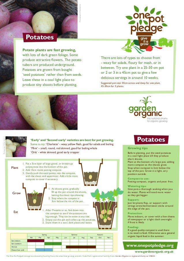 Photography © Ray Spence  Potatoes  Photography © Ray Spence  Potato plants are fast growing, with lots of dark green foli...
