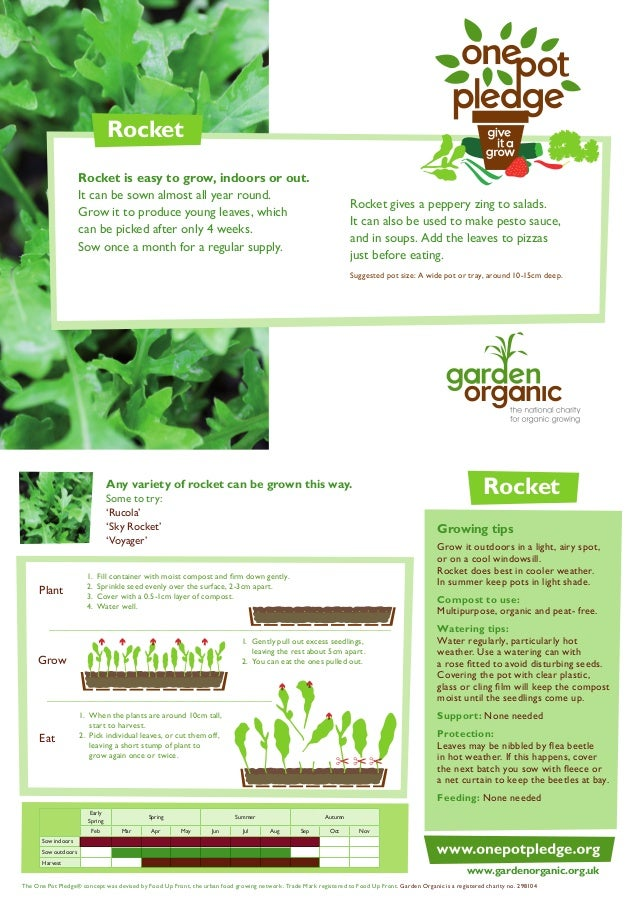 Rocket Salads - Organic Growing Guides for Teachers