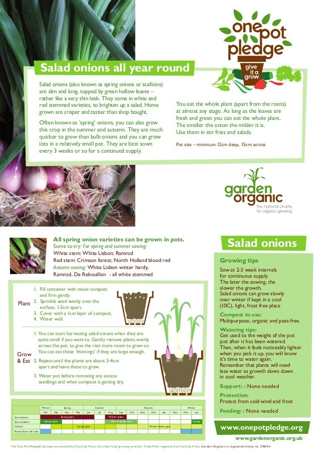 Salad Onions - Organic Growing Guides for Teachers