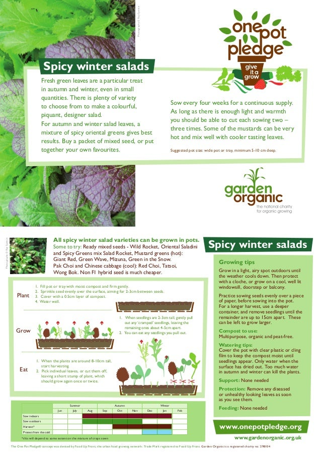 Winter Salads - Organic Growing Guides for Teachers