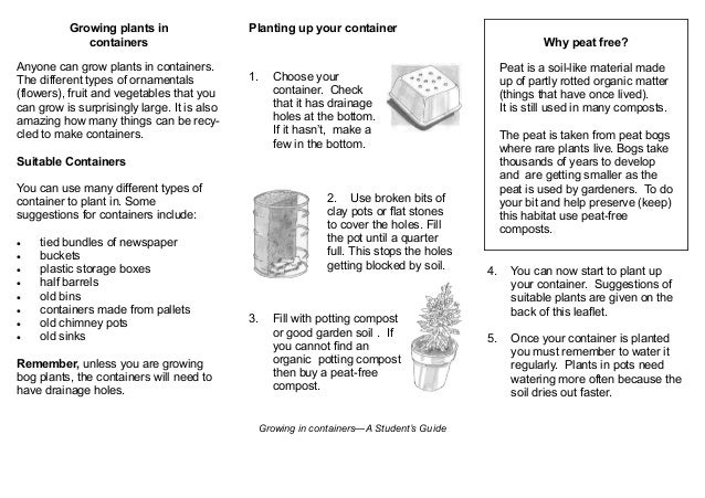 A Student's Guide to Growing Plants in Containers