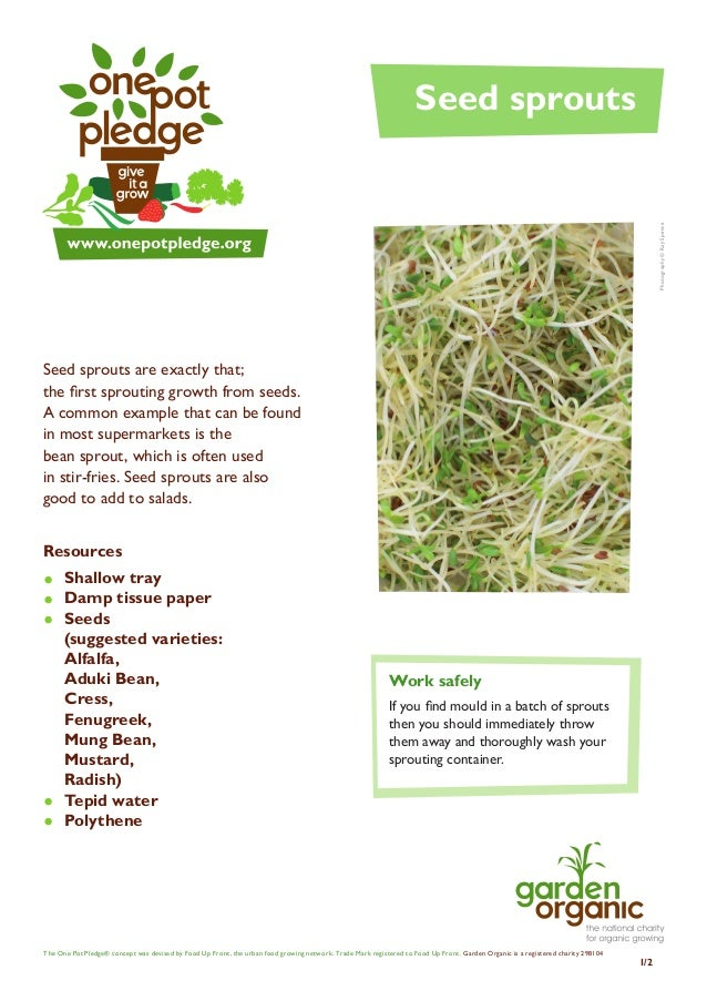 Sprouting Seeds - Teacher + Student Guide