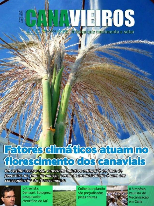 1  Revista Canavieiros - Março 2011