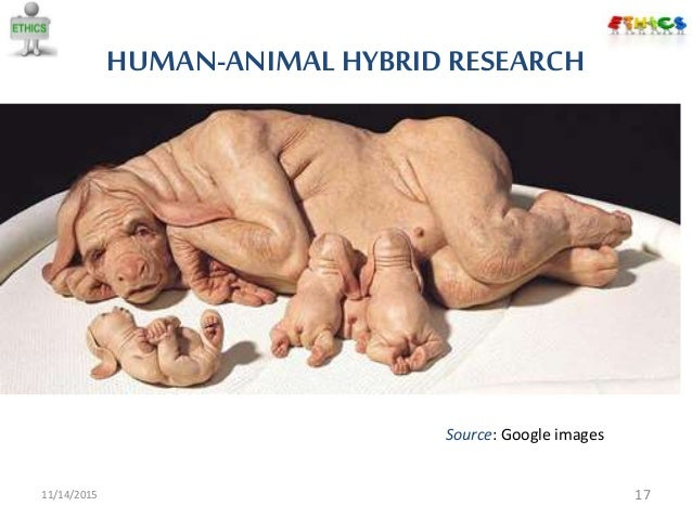 animal human research Thus, the primary goal of human-animal chimera research is to produce human cellular characters in animals the animal carrying the human tissue can then be examined or treated to investigate human-specific biological processes and disease without experimentation on human individuals.